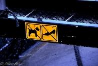 Spaß I: No dogs - no chicks