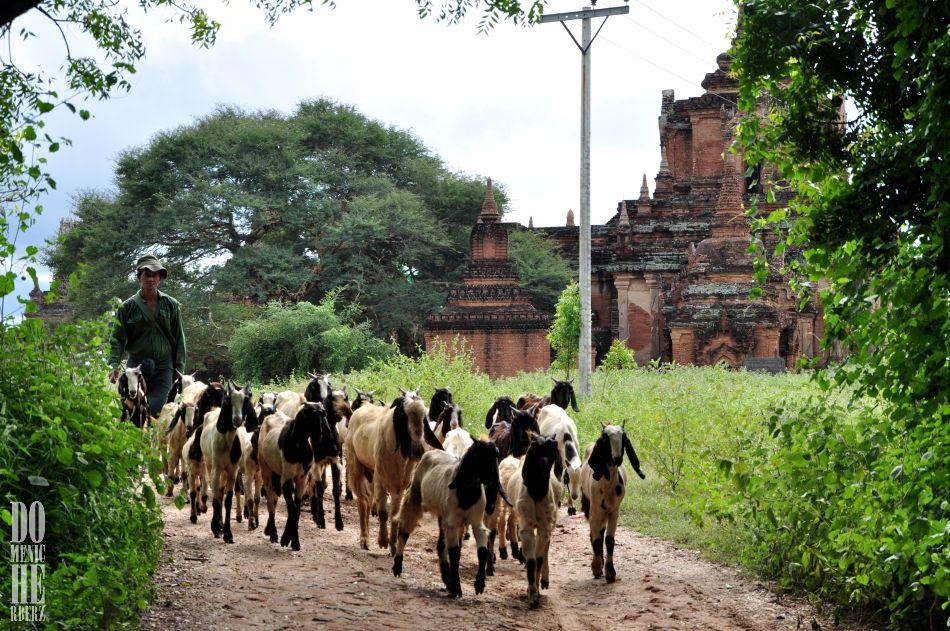 Myanmar II – Bagan